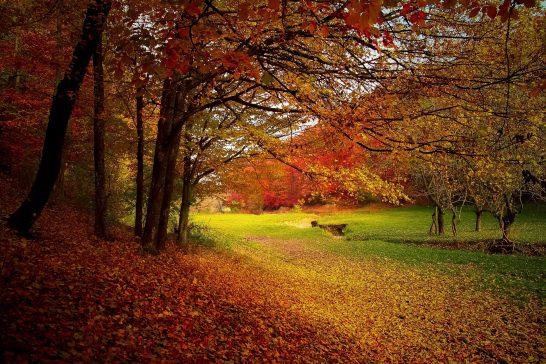 札幌市の紅葉